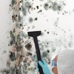 Black-Mold-Remediation-Menlo Park