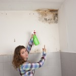 Menlo Park-Mold-Remediation