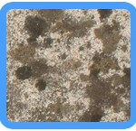 Water-Mold-Removal-Menlo Park